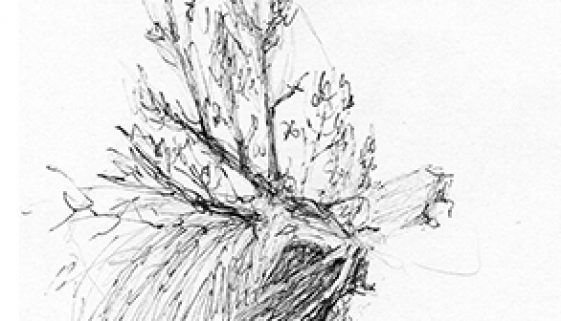 Drawing While Traveling - Sage