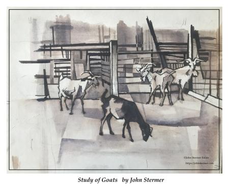 John Stermer Goat Study